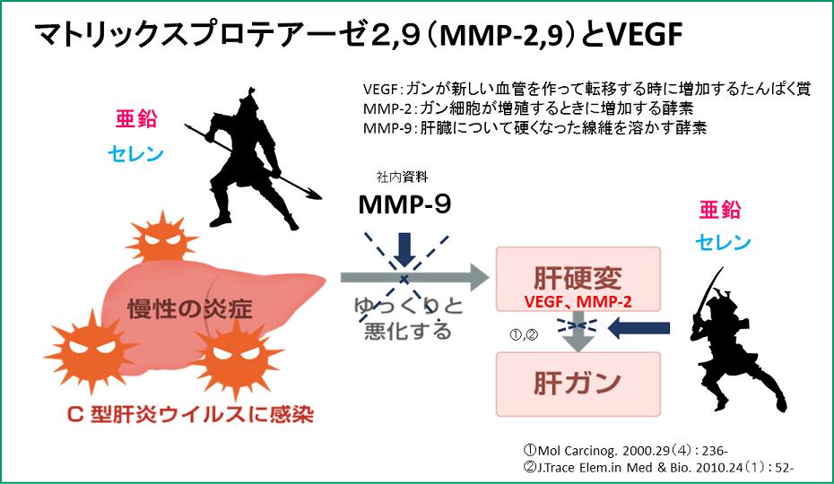 ミネラルがproMMP9を増やします