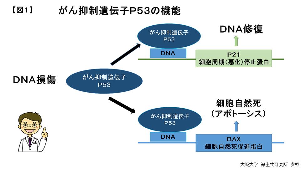p53-1